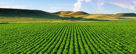 """Стартира приемът на заявления по подмярка 6.3 """"Стартова помощ за развитието на малки стопанства"""" на ПРСР 2014-2020"""