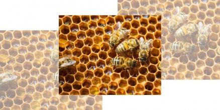 Предстои отваряне на прием за 2017 г. по новата Национална програма по пчеларство (НПП) 2017-2019 г.